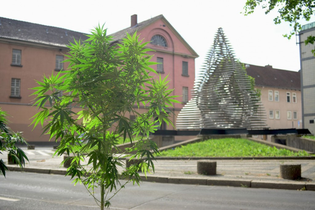 marijuana-germany